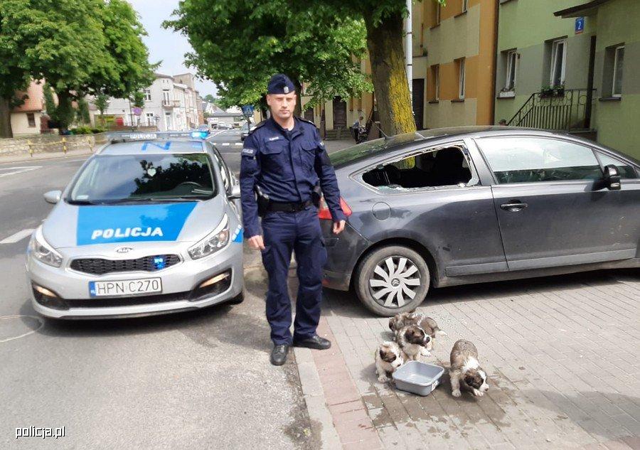 Policja uratowała cztery szczeniaki zamknięte w aucie